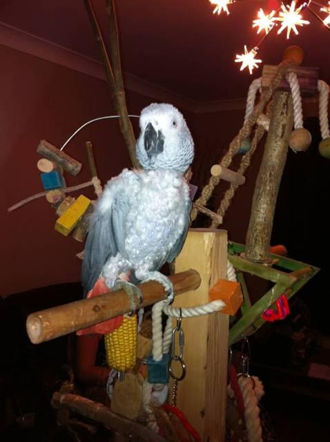 Say hi to Poppy / Britney bird