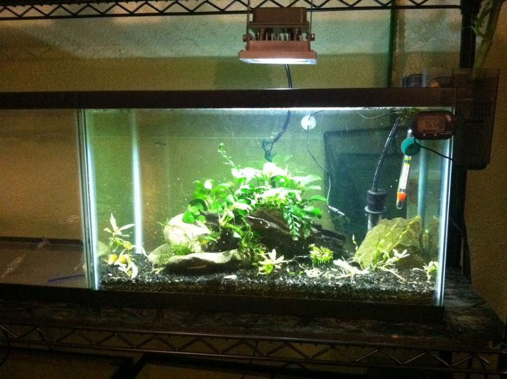 For a 75g tank the 10w fixtures will not penetrate very well. I would suggest 3-4 20w fixtures or maybe a couple 30w fixtures. & Doing LED lighting on the cheap - The Planted Tank Forum azcodes.com
