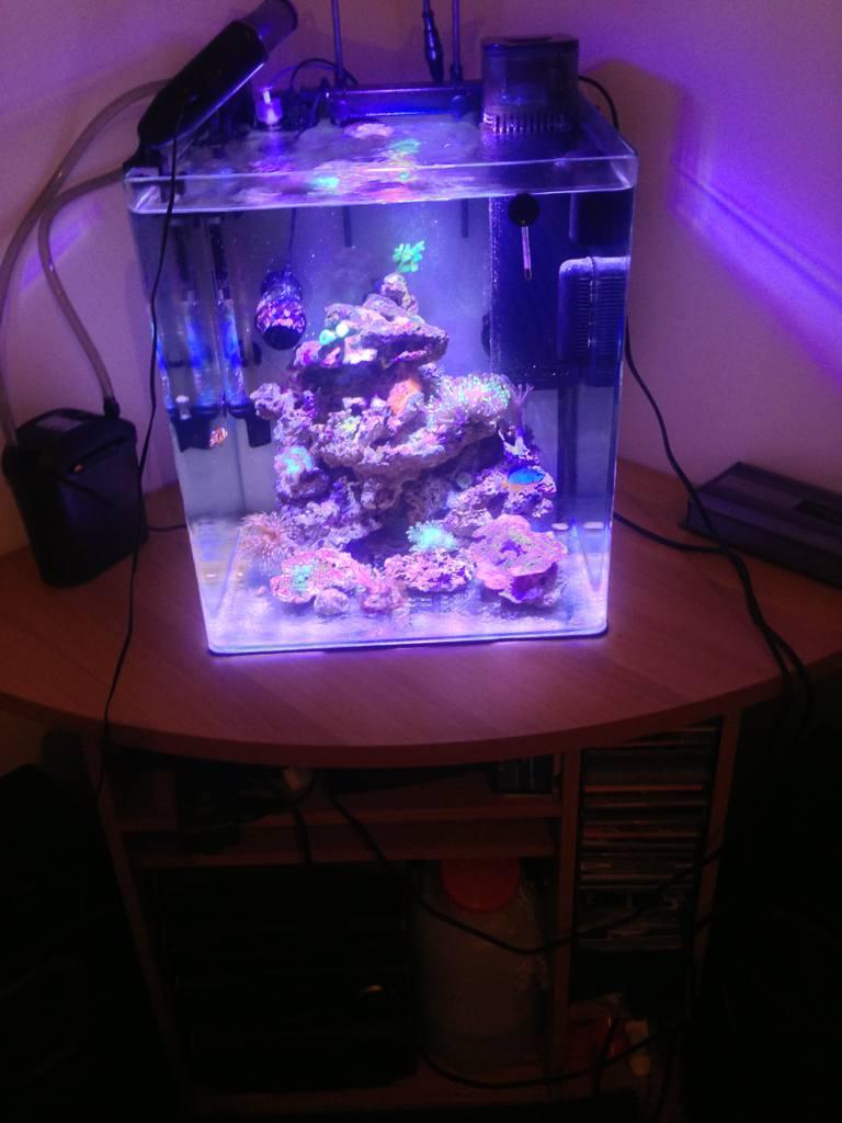 supporto per acquario 30 litri: amzdeal® illuminazione acquario ... - Mobili Per Acquario Marino