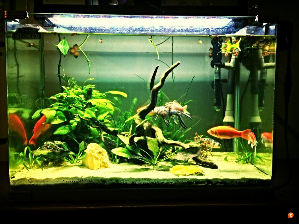 Vasche per pesci rossi da giardino stato trasformato in for Vasca pesci rossi giardino
