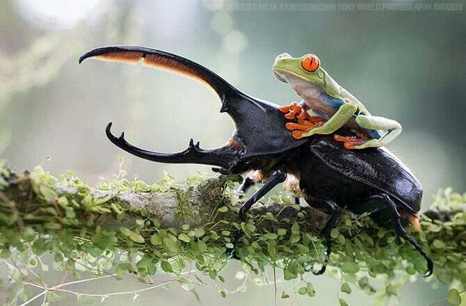 y4e7avy2 - Frog the Rider - Photos Unlimited