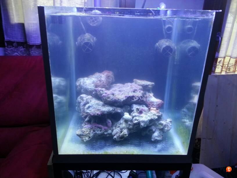 Plafoniere Led Per Nanoreef : Avvio nanoreef lps archivio acquaportal forum acquario dolce e
