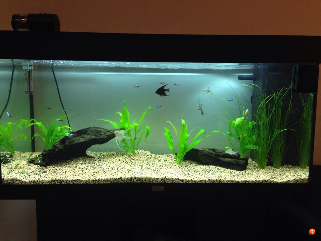 acquario senza terriccio si possono mettere delle piante - forum ... - Allestimento Acquario Dolce Con Piante Vere