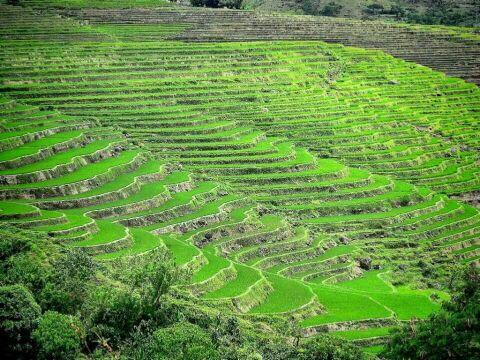 y3y3upuh - Rice Terraces in Canlaon City, Negros Oriental - Philippine Photo Gallery