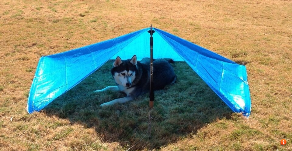 & Tarp shelter for your dog