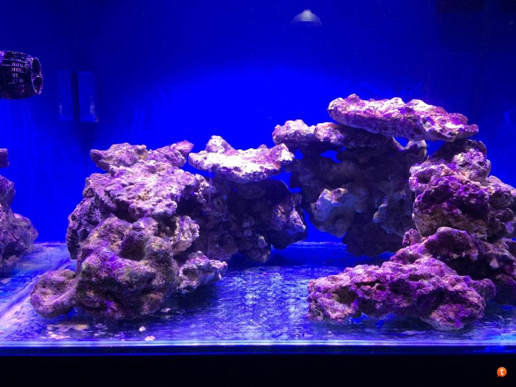 pesci tropicali per acquario dolce: la conduttività in un acquario ... - Mobili Per Acquario Marino