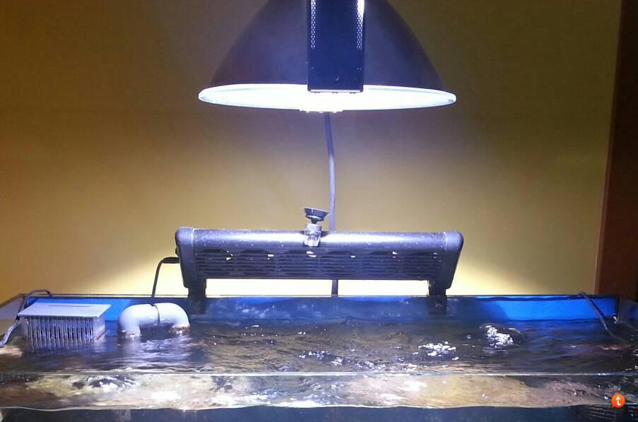Plafoniere Hqi Per Acquario Marino : Plafoniera acquario marino elos e power da watt hqi