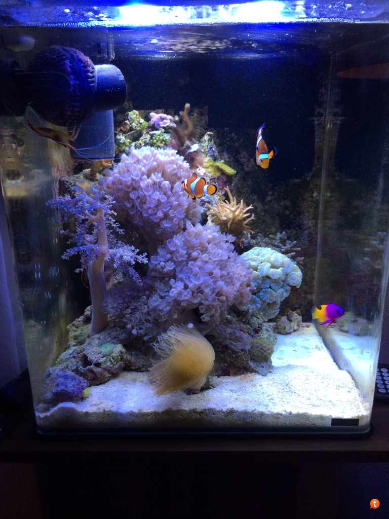 matje voor op bodem aquarium