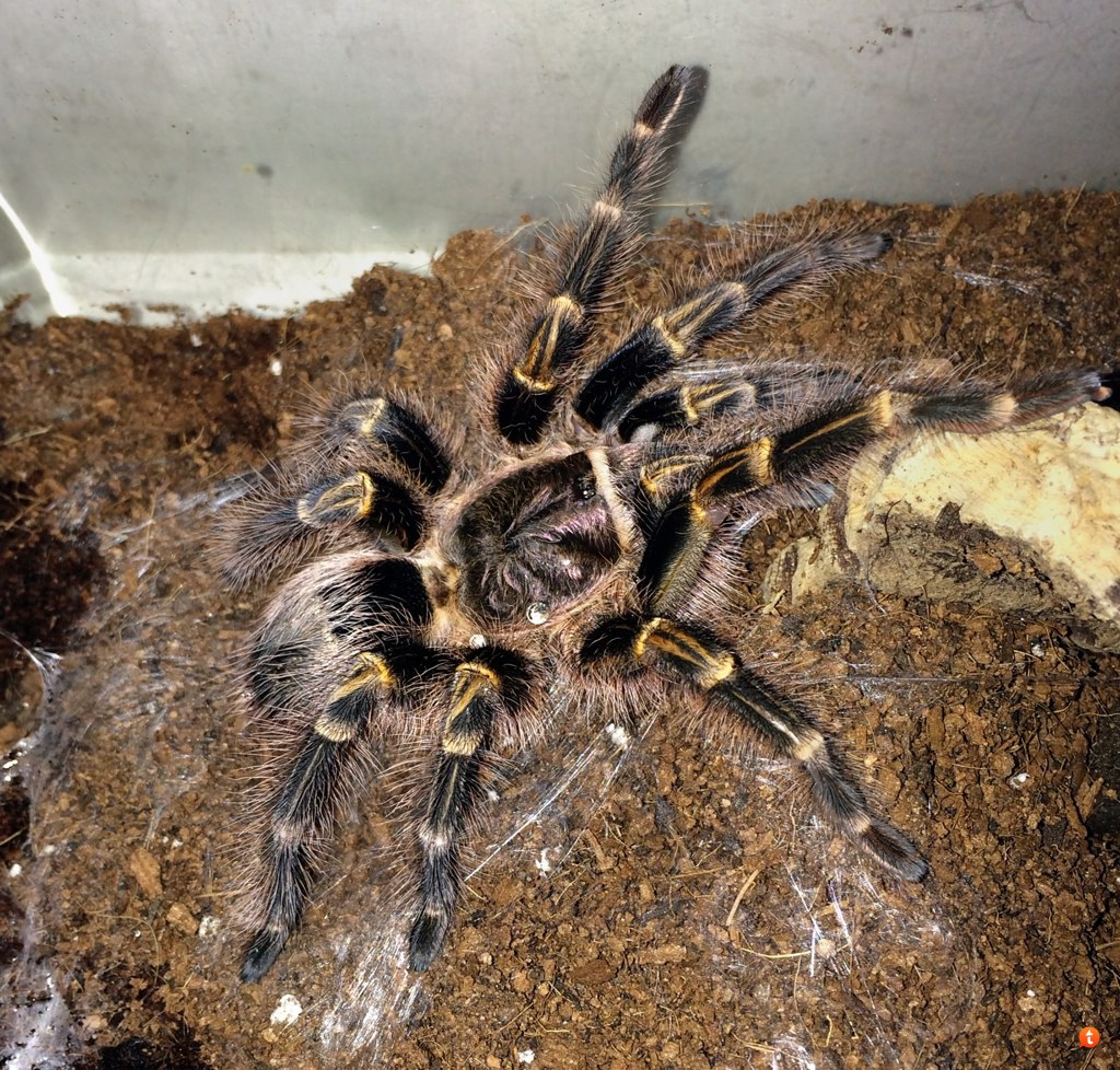 Your Tarantula and Spider pix.... - Page 3 2y4ube3e