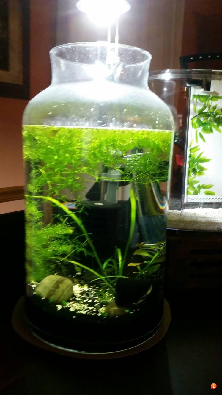 5 gallon vase the planted tank forum reviewsmspy