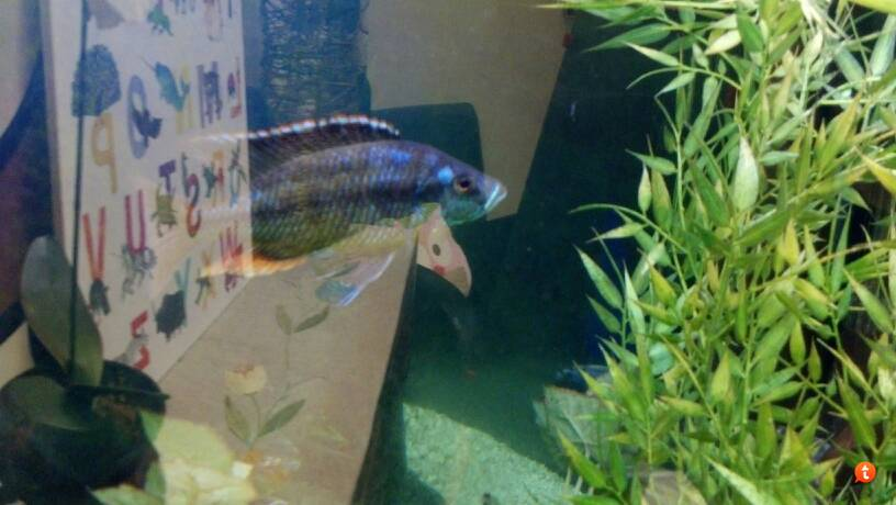 Daycare - What is it? - Oscar Fish Advice Forum