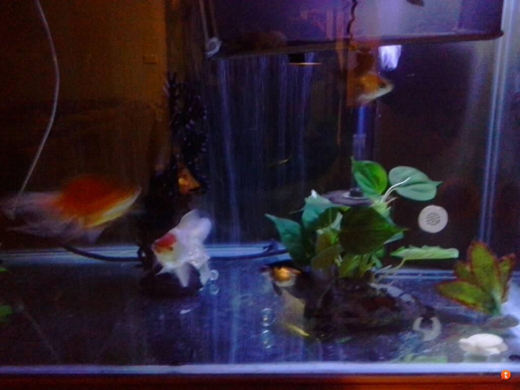 Fish aquarium in ecr - 8e8ygaje Jpg Sy4ynymy Jpg