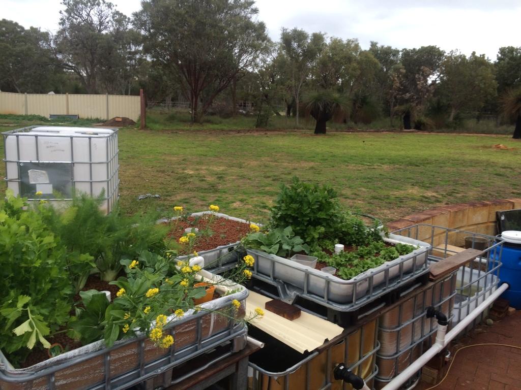 backyard aquaponics u2022 view topic insulation of fish tank