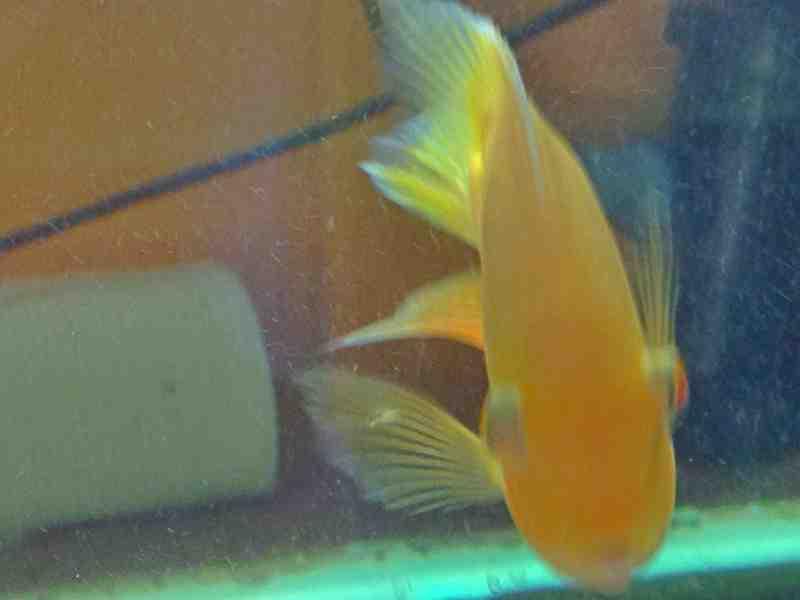 So over this severum tank! - General Aquarium Discussion