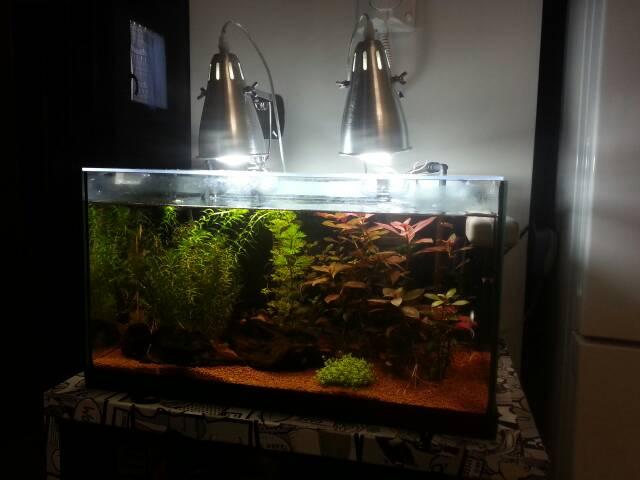 Plafoniere Per Acquari Aperti : Acquario semi aperto forum acquariofilia facile allestimento e