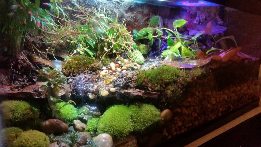 First Dart Frog Tank 20g Long Dendroboard
