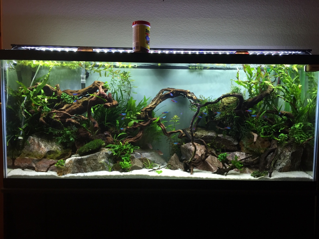 tropical fish tank setup pdf