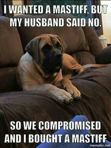 259b33b05bfc6b4c15ba26ff11a4d05b share your favorite dog memes mastiff forum