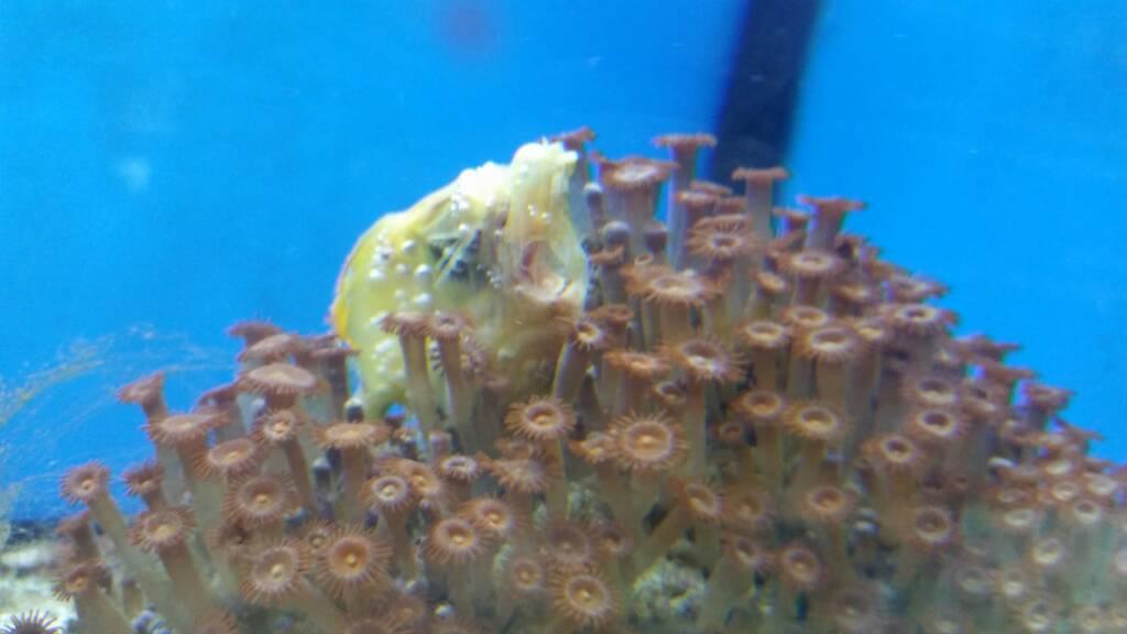 Aaah! Petco's aquatics is horrible! [Archive] - Reef Central