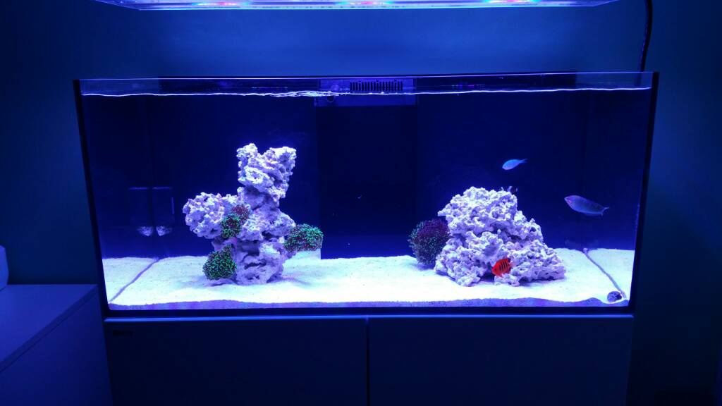 Can I Get Some Opinions On My Aquascape For A Soon To Be Sps Dominated Tank?