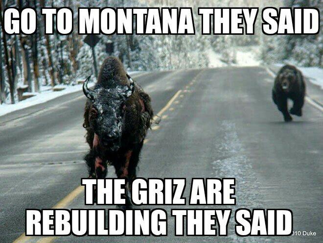 01a9e2f9890b5fd3cd0b2b3e21b69ff9 griz meme contest montana grizzlies \u2022 griz athletics