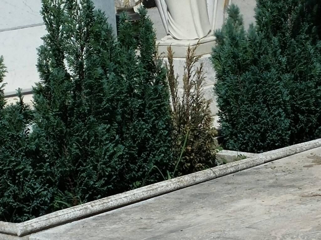 Cipresso Seccato E Un Parassita Forum Di Giardinaggio It