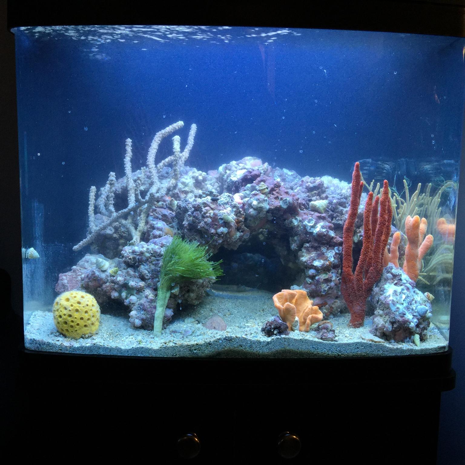 Fish & Aquariums Aquatronica Aquarium Automation System Aquascape Cheap Sales 50%
