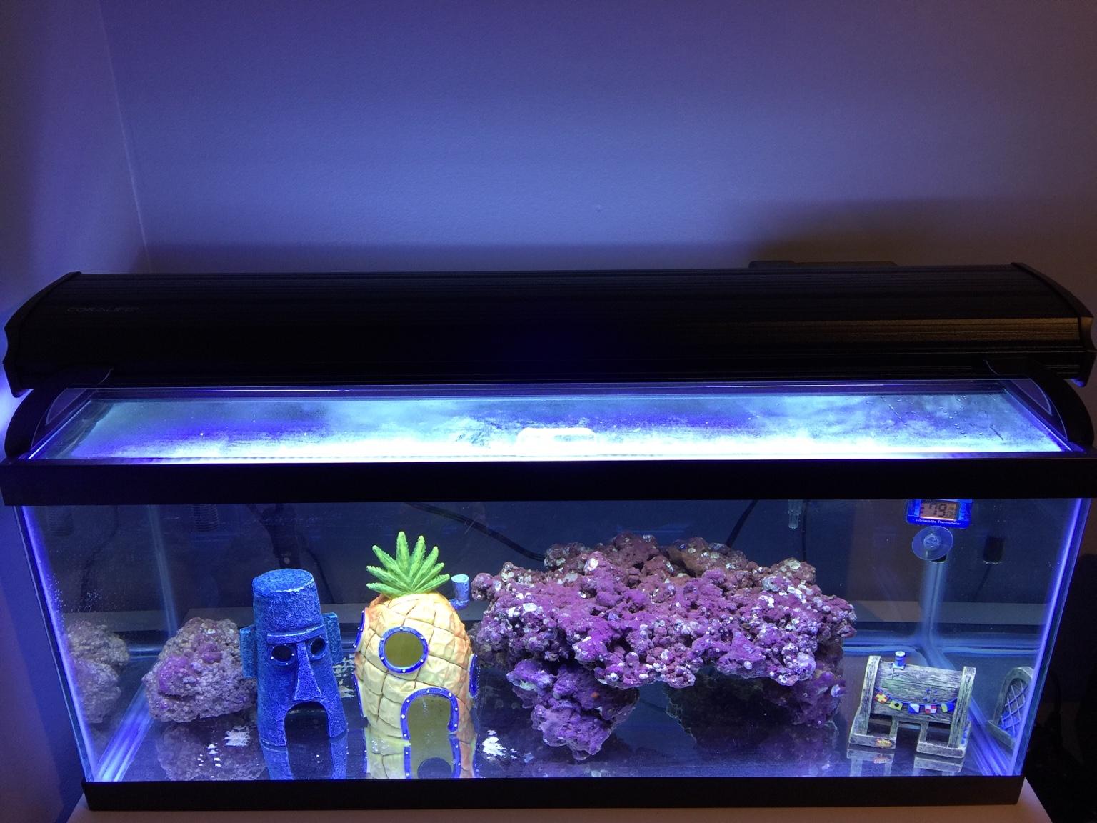 Aquatronica Aquarium Automation System Aquascape Cheap Sales 50% Fish & Aquariums