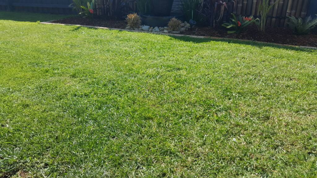What type of lawn is this?