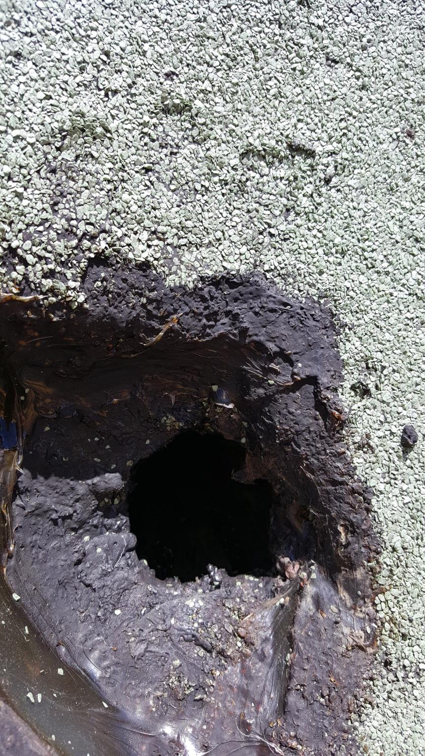 Gut bekannt Flachdachsanierung - Alte Bitumenbahnen entfernen?! YU61