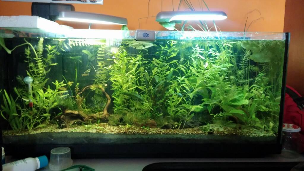 Illuminazione per acquario litri acquario completo litri