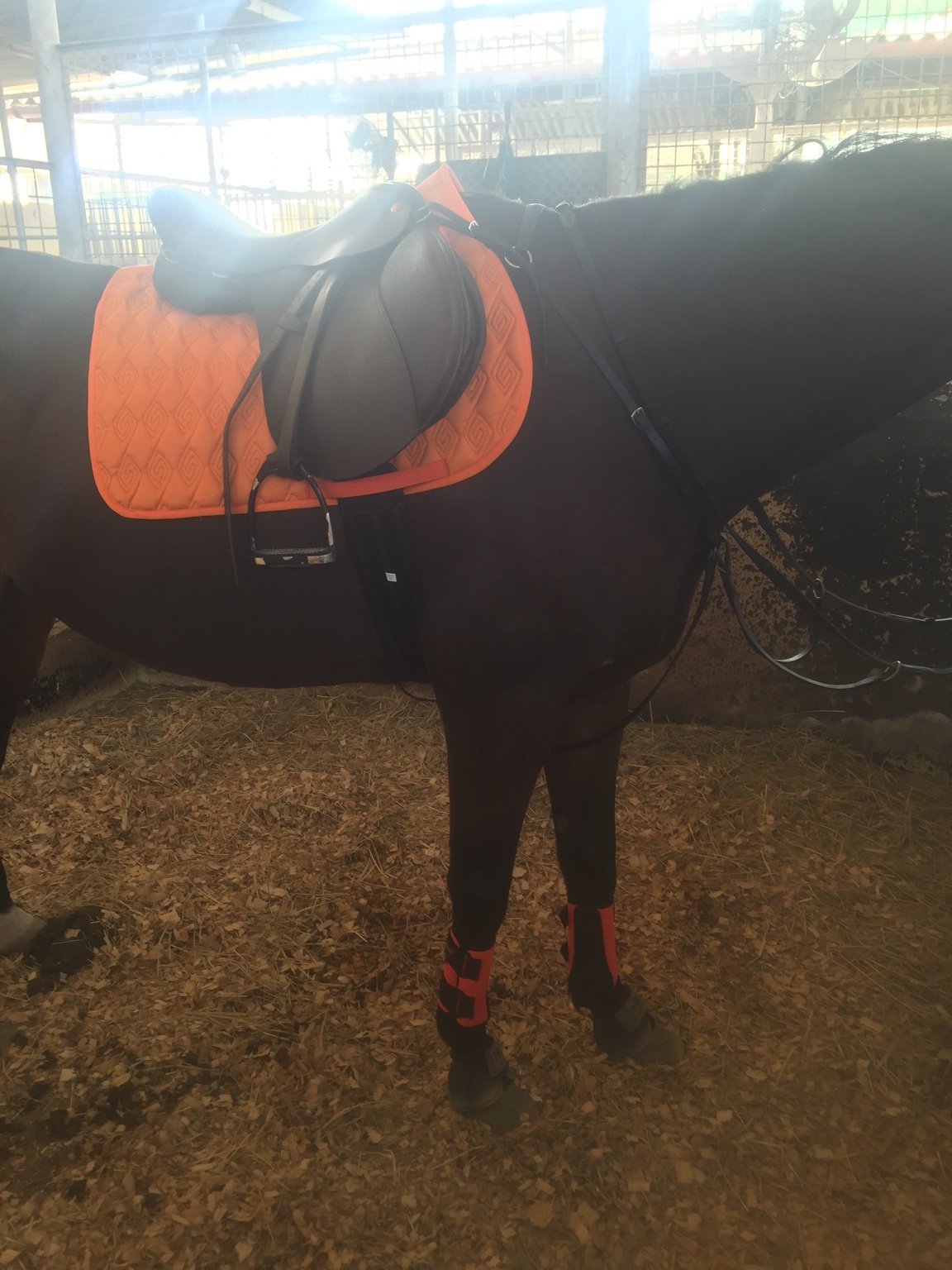 Numnah Colour For Brown Tack On A Bay Horse New Rider Forum