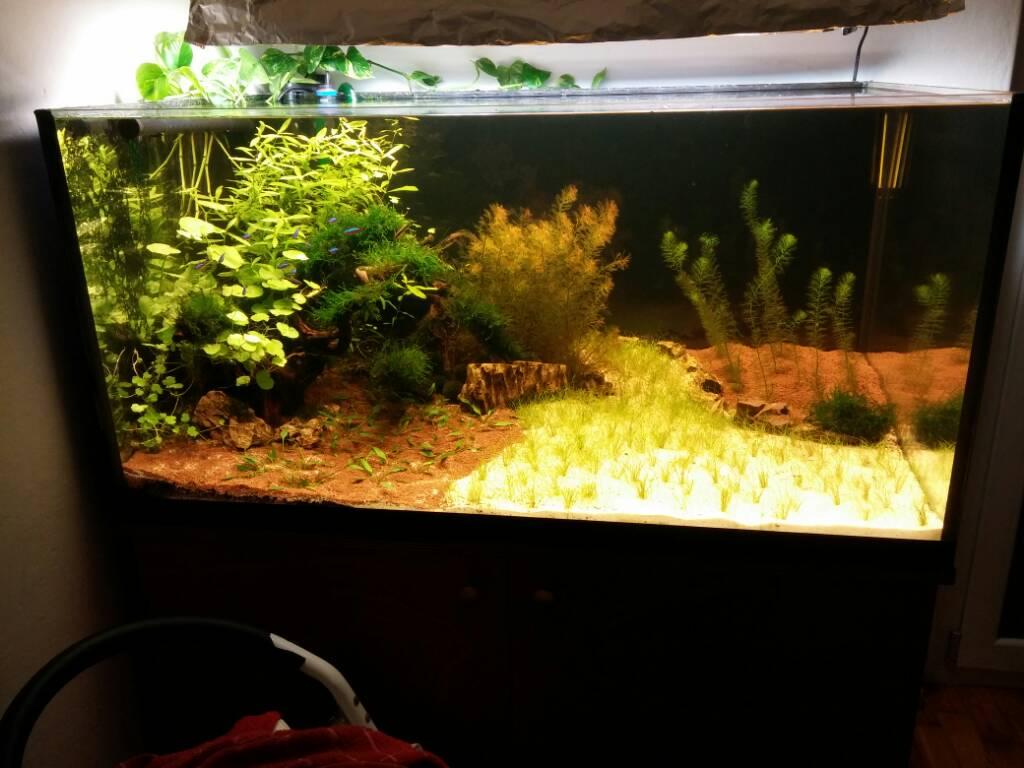 come allestire in acquario: il mio primo acquario askoll pure xl ... - Allestimento Acquario Per Betta Splendens