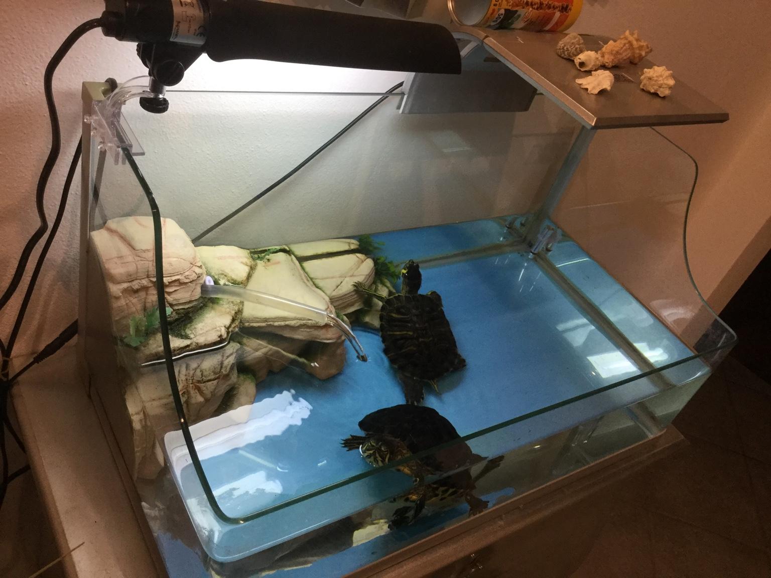 Vasca Da Esterno Per Tartarughe : Finestre antisfondamento filtro esterno per tartarughe