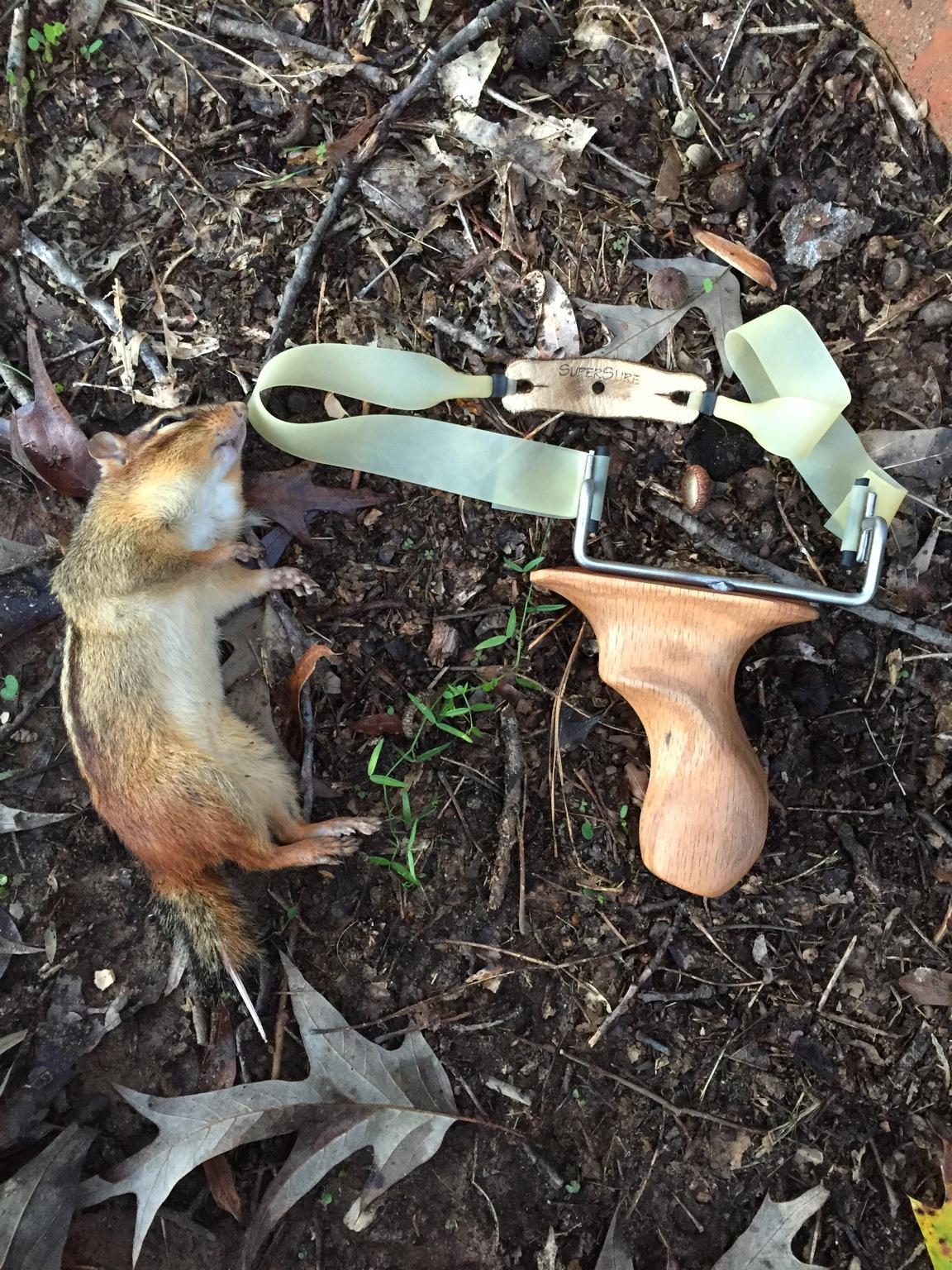 Chipmunk before work  - Slingshot Hunting - Slingshot Forum