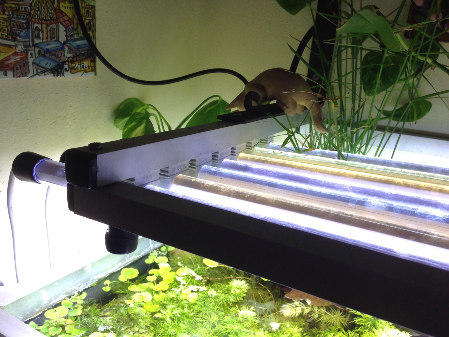 Plafoniere Per Acquari : Costruire plafoniera acquario happycinzia