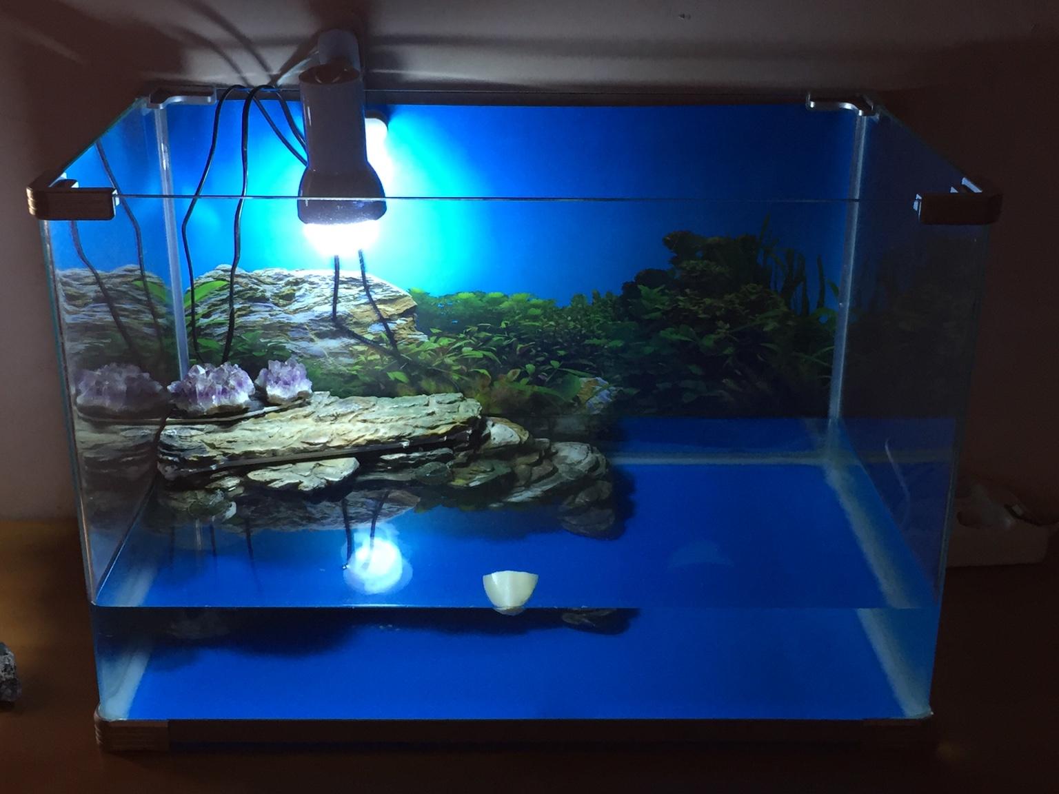 acquario tartarughe filtro: blog negozio di animali anche esotici