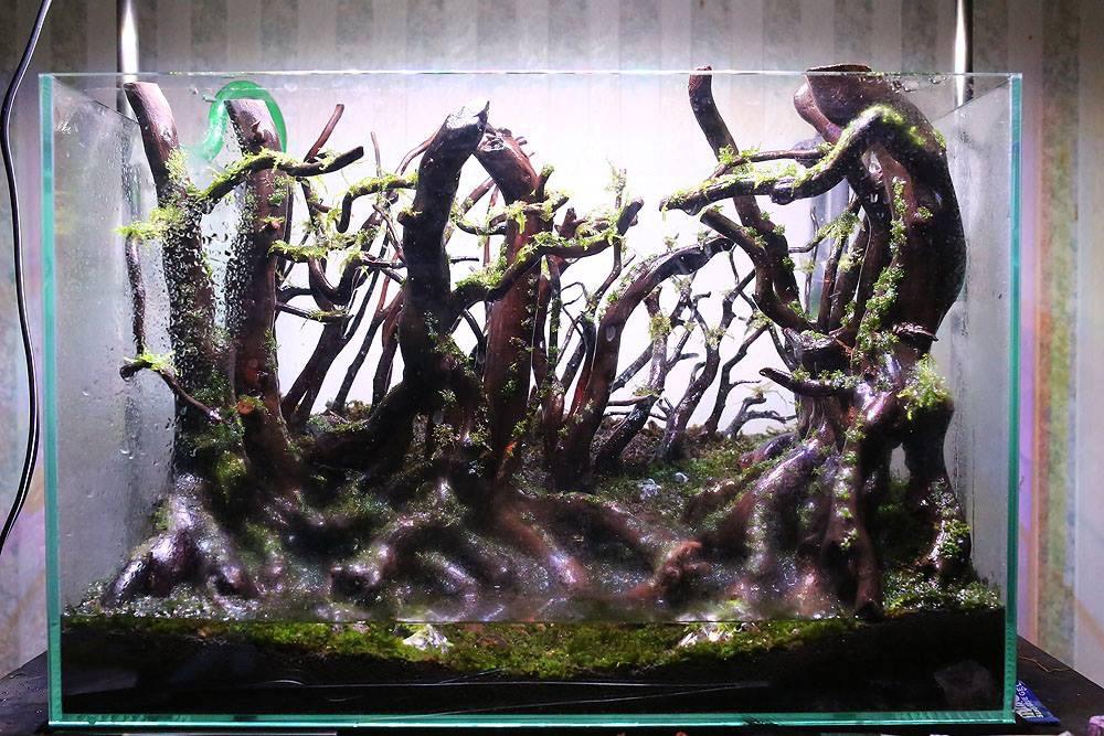 acquario senza piante vere: acquario litri piante vere lumache ... - Allestimento Acquario Dolce Con Piante Vere