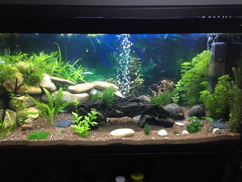 acuario de killo 200 litros