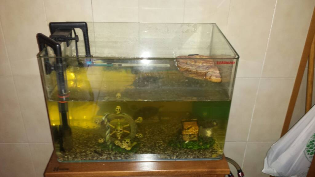 Acqua verde for Acquario per tartarughe con filtro
