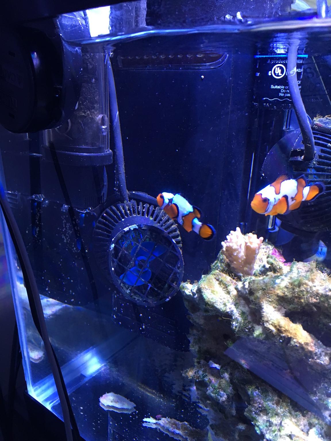 Jayslittleocean S 10 Gallon Nano Reef 3reef Aquarium Forums