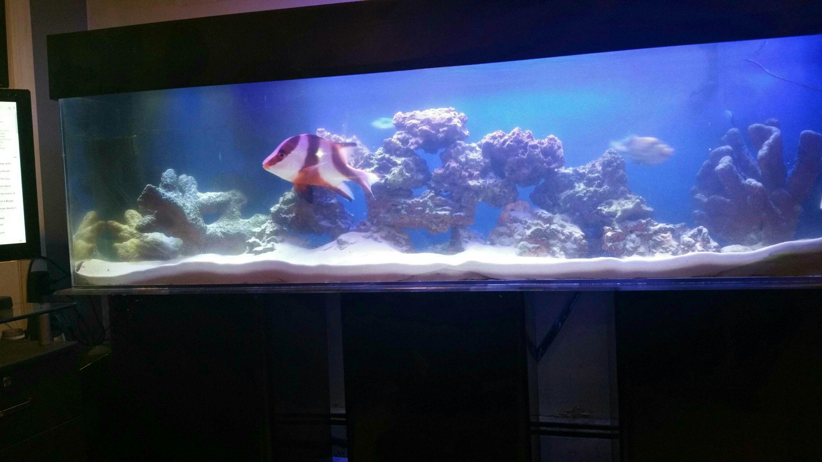 Best company to buy 125 gallon acrylic aquarium advice for 125 gallon fish tank stand