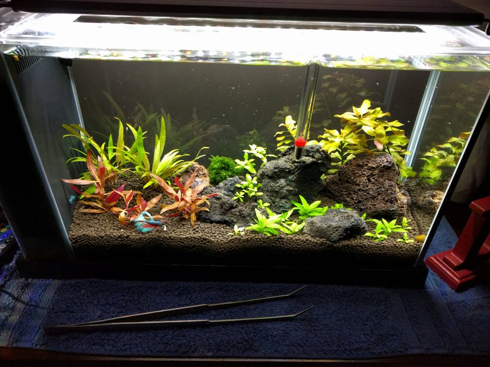 Black Lava Rock The Planted Tank Forum