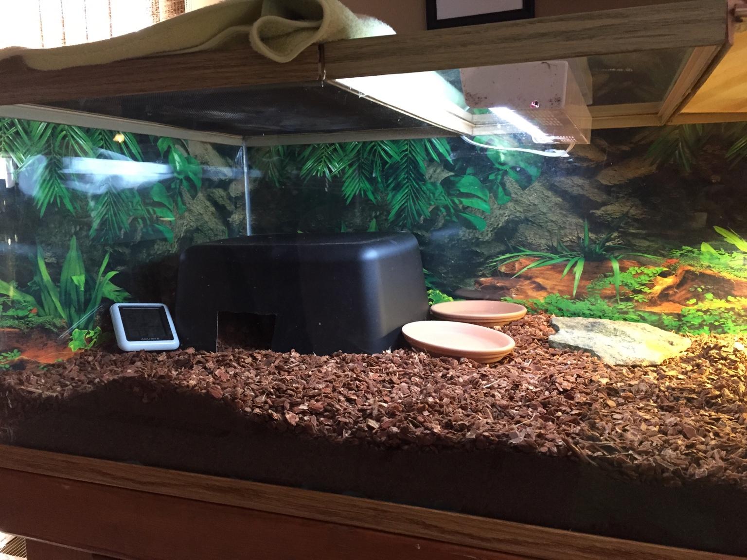 Please Critique New Baby Sulcata Habitat Tortoise Forum