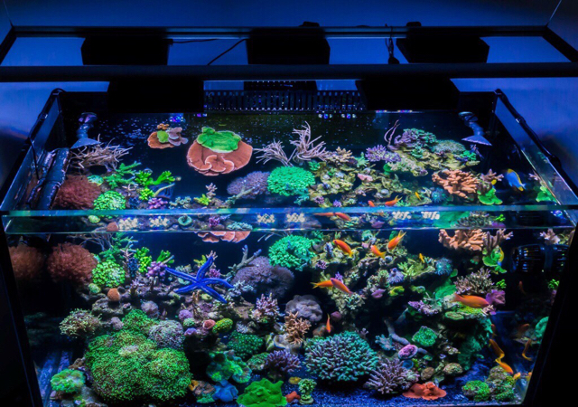 Kessil Ap700 Reef Central Online Community