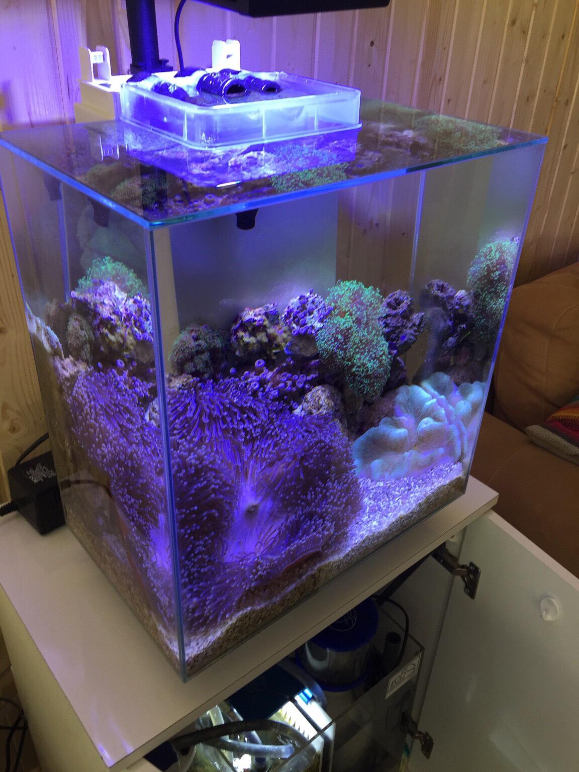 fluval edge ii diy reef conversion reef central online community. Black Bedroom Furniture Sets. Home Design Ideas