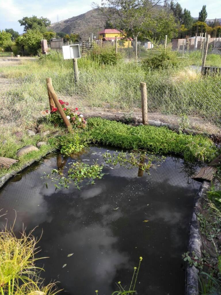 Ver tema nuevo estanque 5000 litros app for Estanque de agua 5000 litros