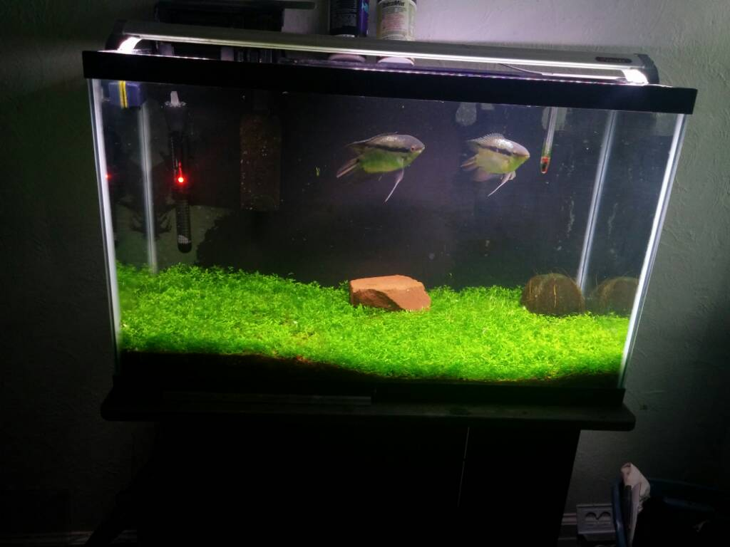 Fastest Growing Mini Mosses Or Carpets The Planted Tank