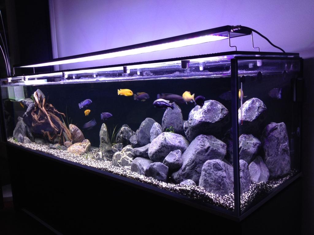 Illuminazione Fai Da Te Per Acquari: Illuminazione fai da te per acquari costruzione plafoniera ...
