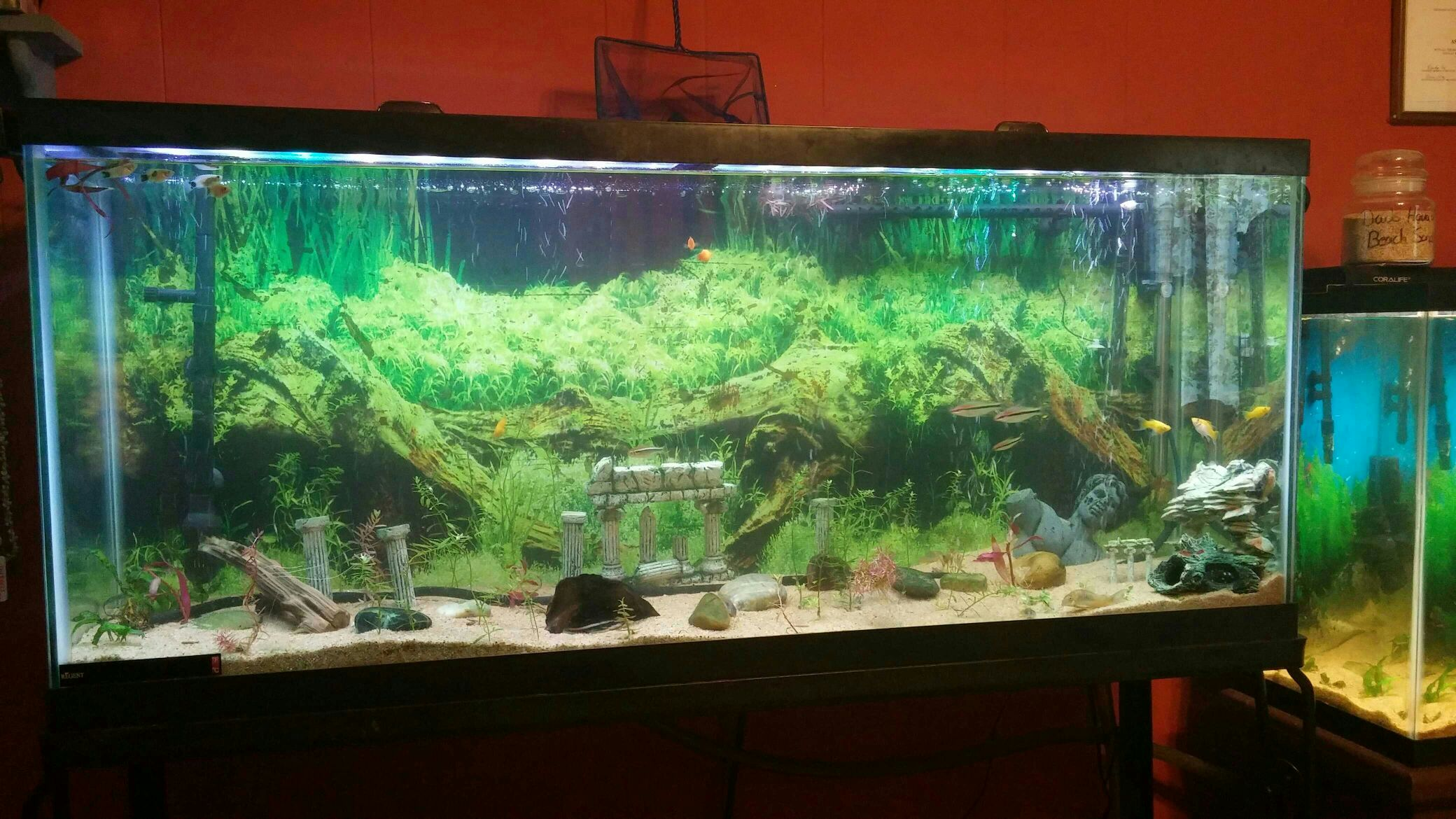 So in closing Ladies and Gents where you buy your next cheap LED light from is all up to you but for a CHEAP planted tank LED light with good PAR ... & 3 low cost LED light review - Page 6 - The Planted Tank Forum azcodes.com